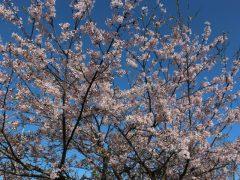 桜も綺麗でした♪