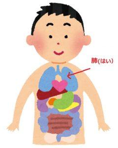 「燥」に弱い臓器・・・肺!!!
