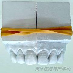 歯型彫刻部門 最優秀賞 ~右のモチーフと左右対称に3本の歯の石膏彫刻~