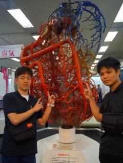 冠血管モデル