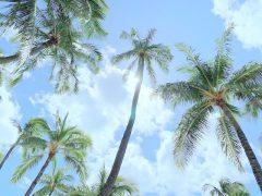 常夏の楽園の象徴ヤシの木